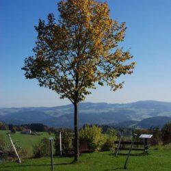 Podzim na Dobíkovi